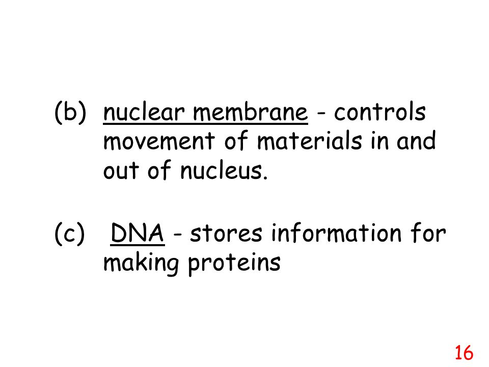 (c) DNA - stores information for making proteins