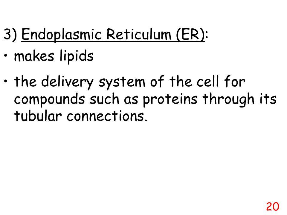 3) Endoplasmic Reticulum (ER):