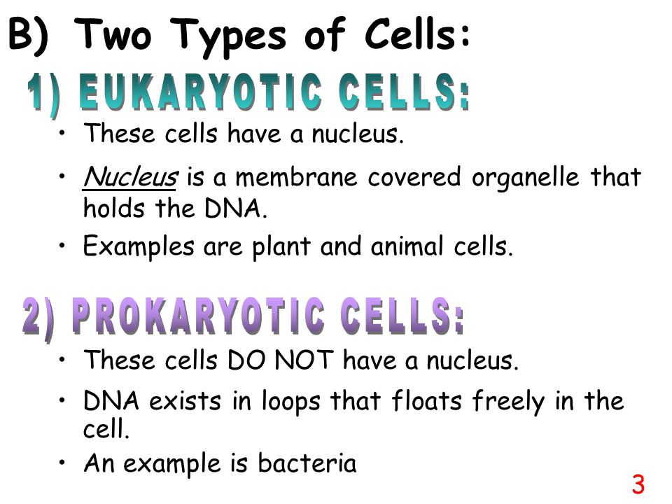 B) Two Types of Cells: 1) EUKARYOTIC CELLS: 2) PROKARYOTIC CELLS:
