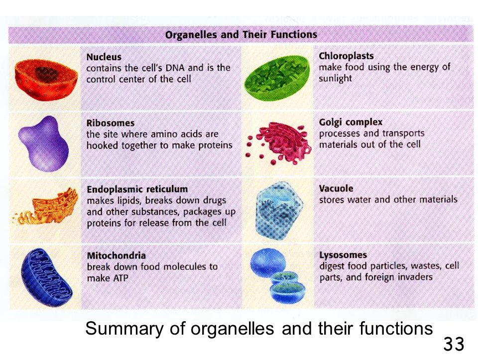 Summary of organelles and their functions