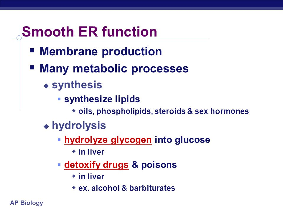 Smooth ER function Membrane production Many metabolic processes