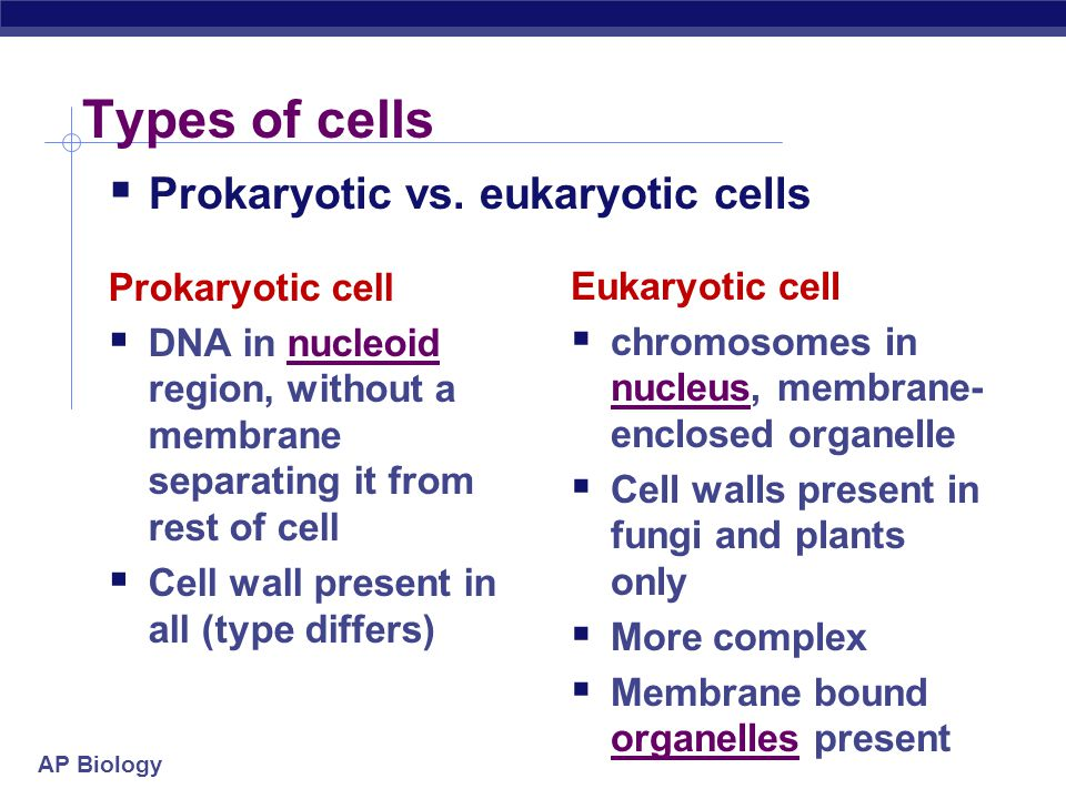 Types of cells Prokaryotic vs. eukaryotic cells Prokaryotic cell