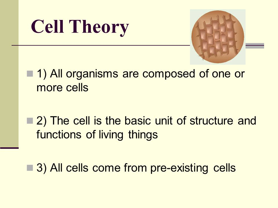 Cell Theory 1) All organisms are composed of one or more cells