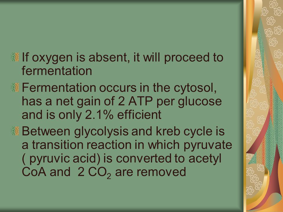 If oxygen is absent, it will proceed to fermentation