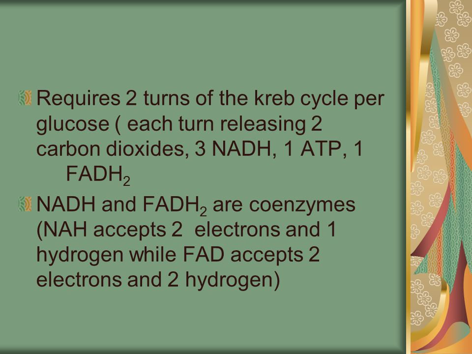 Requires 2 turns of the kreb cycle per glucose ( each turn releasing 2 carbon dioxides, 3 NADH, 1 ATP, 1 FADH2