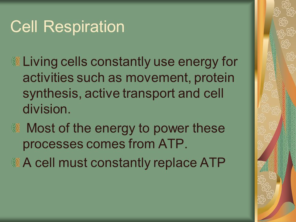 Cell Respiration Living cells constantly use energy for activities such as movement, protein synthesis, active transport and cell division.