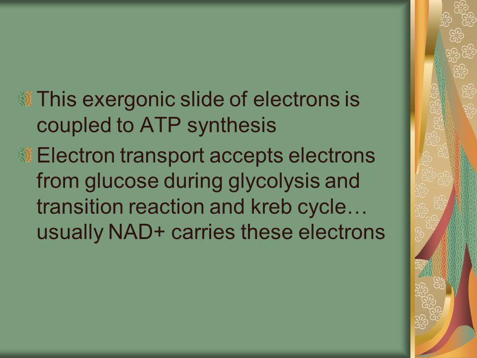 This exergonic slide of electrons is coupled to ATP synthesis