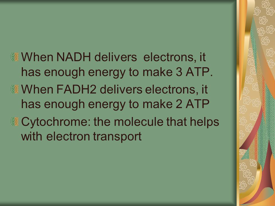 When NADH delivers electrons, it has enough energy to make 3 ATP.