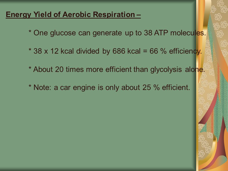 Energy Yield of Aerobic Respiration –