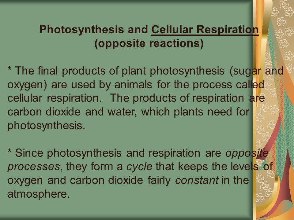 Photosynthesis and Cellular Respiration (opposite reactions)