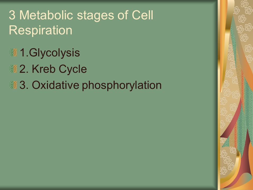 3 Metabolic stages of Cell Respiration