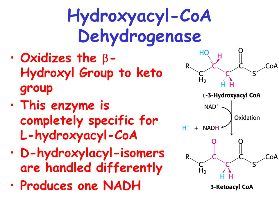 Hydroxyacyl-CoA Dehydrogenase