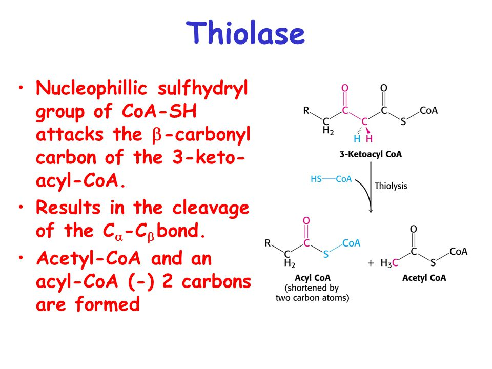 Thiolase Nucleophillic sulfhydryl group of CoA-SH attacks the b-carbonyl carbon of the 3-keto-acyl-CoA.
