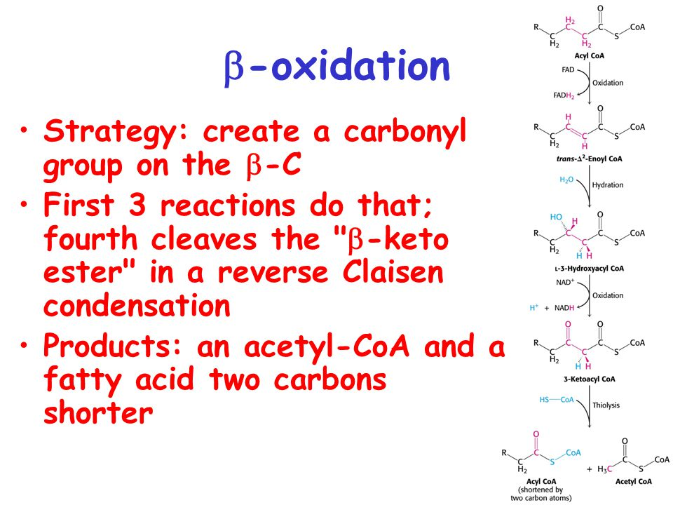 b-oxidation Strategy: create a carbonyl group on the -C