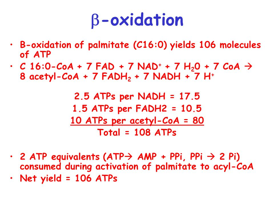 b-oxidation B-oxidation of palmitate (C16:0) yields 106 molecules of ATP.