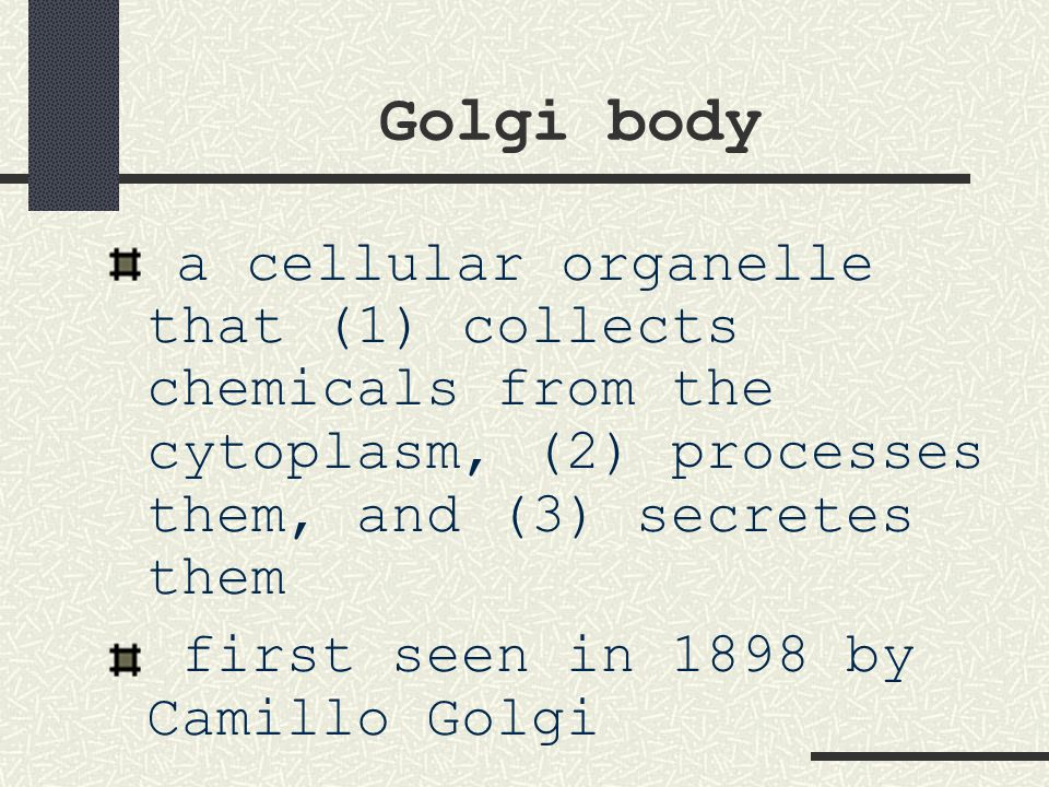Golgi body a cellular organelle that (1) collects chemicals from the cytoplasm, (2) processes them, and (3) secretes them.
