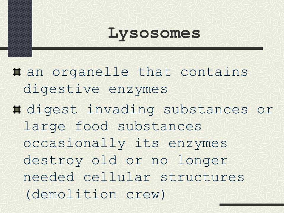 Lysosomes an organelle that contains digestive enzymes