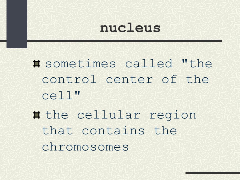 nucleus sometimes called the control center of the cell