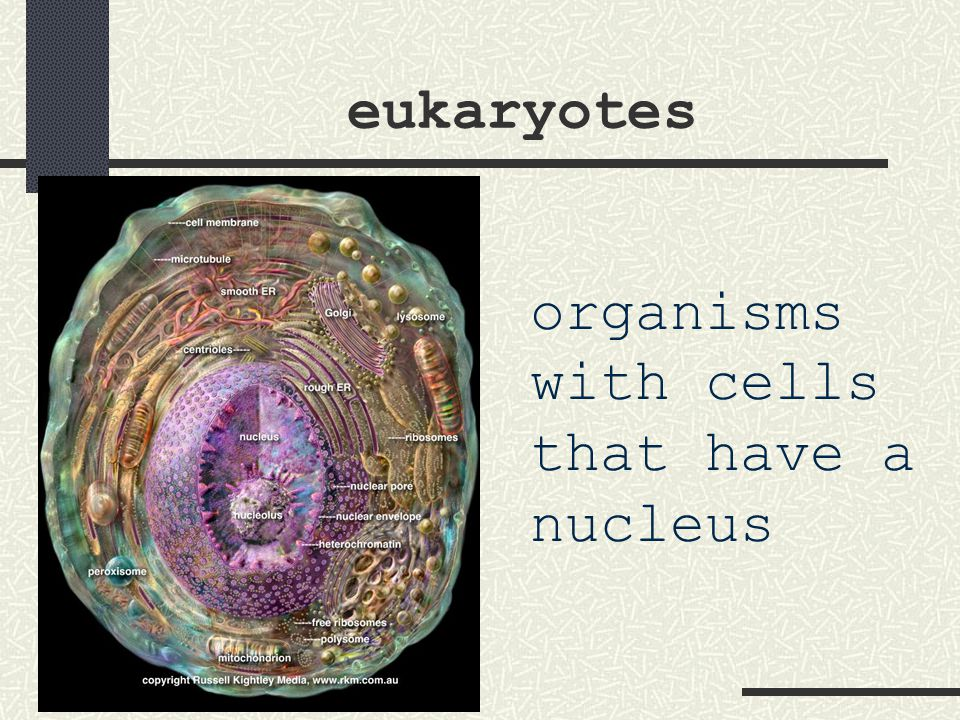 eukaryotes organisms with cells that have a nucleus