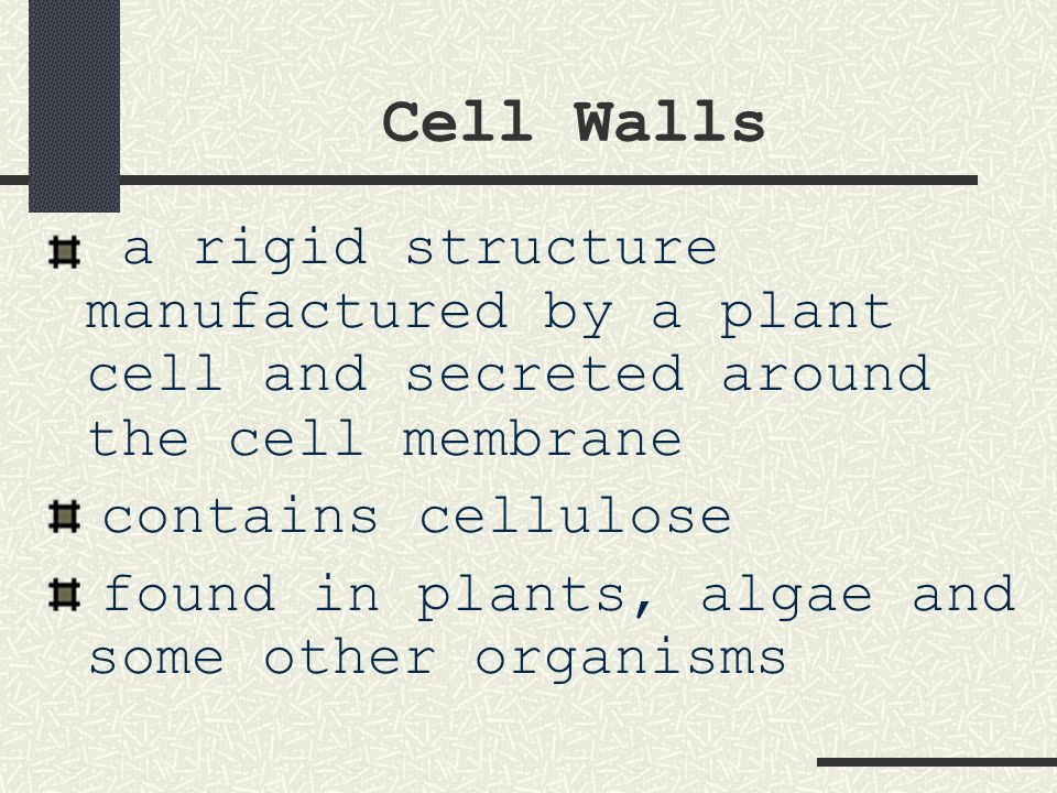 Cell Walls a rigid structure manufactured by a plant cell and secreted around the cell membrane. contains cellulose.
