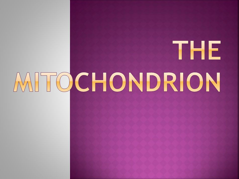 The mitochondrion