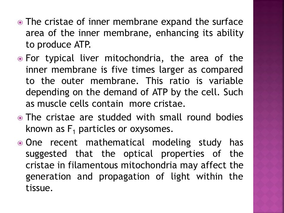 The cristae of inner membrane expand the surface area of the inner membrane, enhancing its ability to produce ATP.