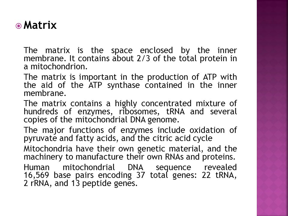 Matrix The matrix is the space enclosed by the inner membrane. It contains about 2/3 of the total protein in a mitochondrion.