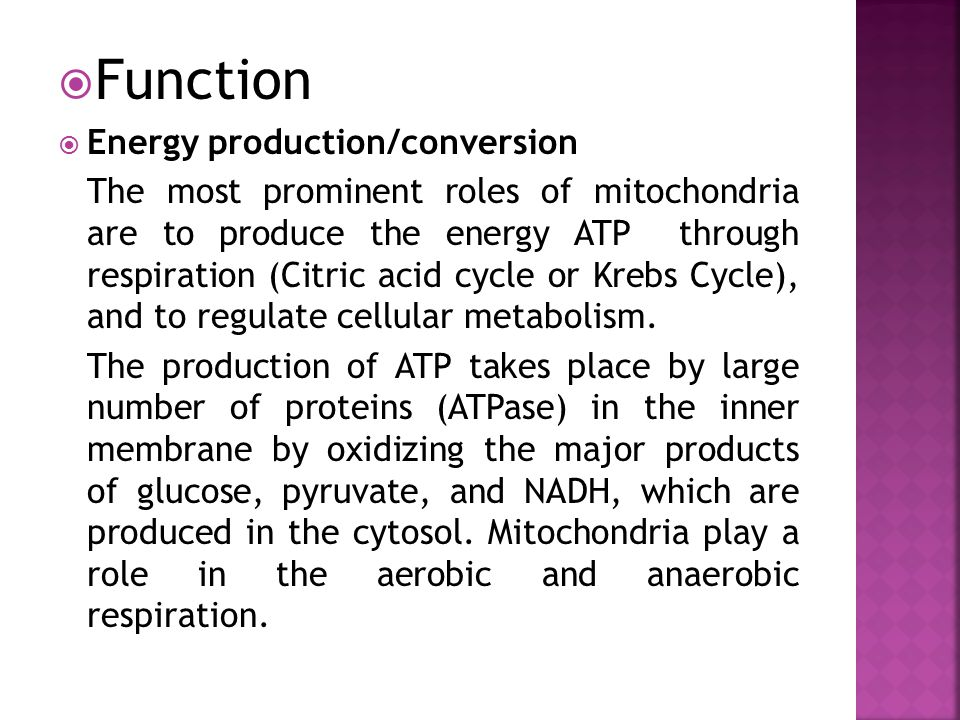 Function Energy production/conversion
