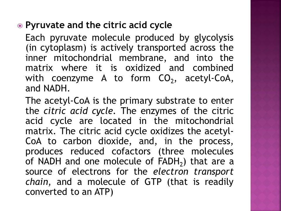 Pyruvate and the citric acid cycle