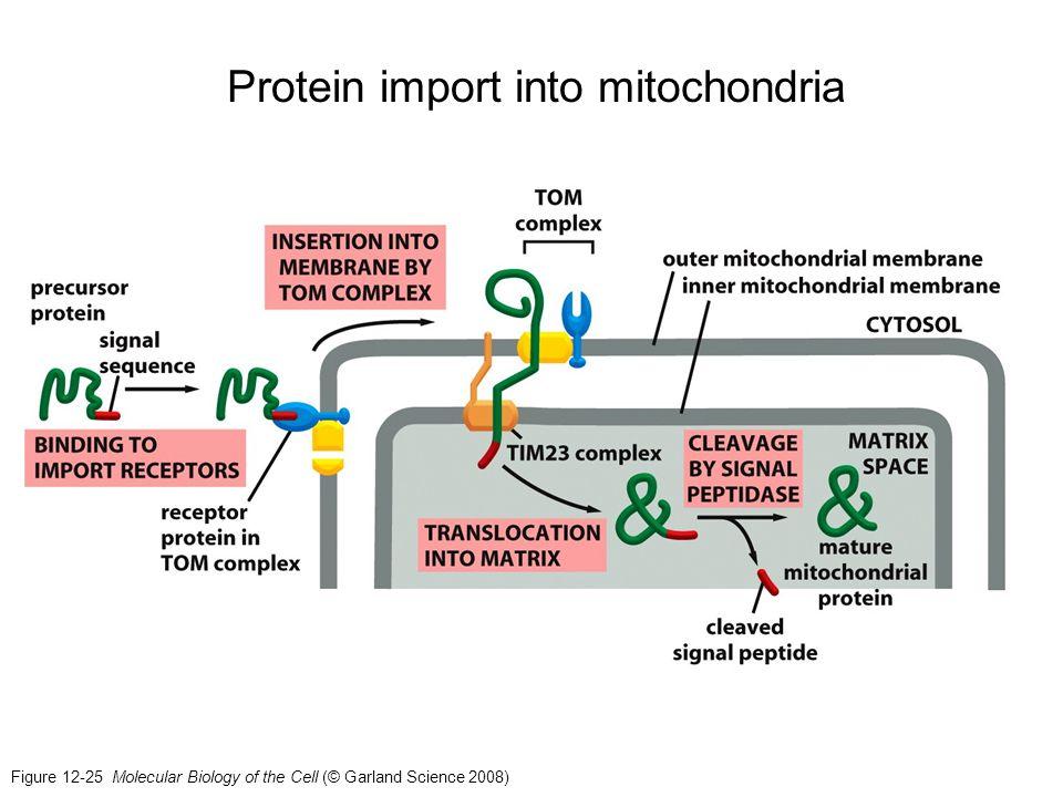 Protein import into mitochondria