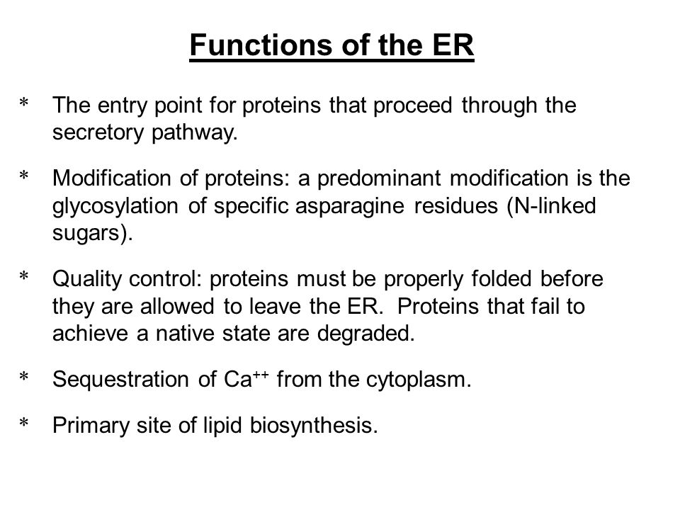 Functions of the ER The entry point for proteins that proceed through the secretory pathway.