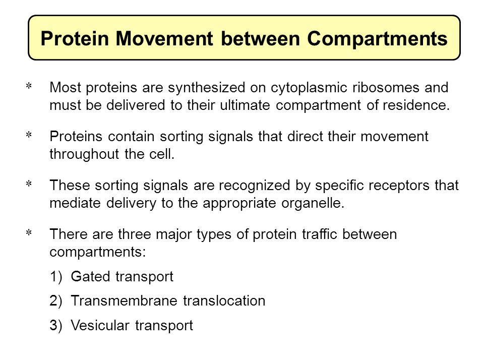 Protein Movement between Compartments