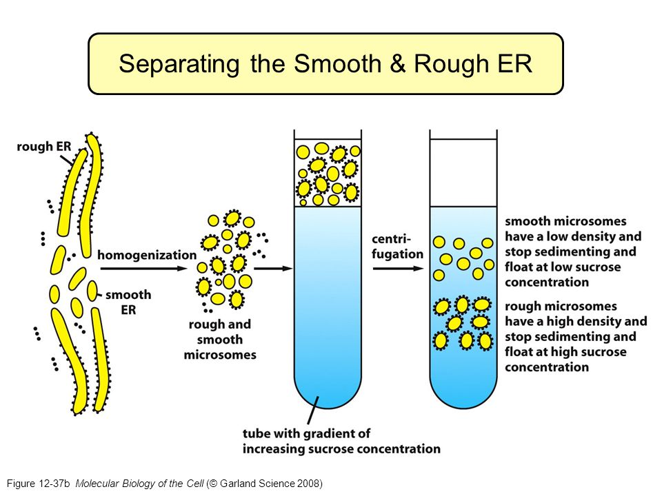 Separating the Smooth & Rough ER