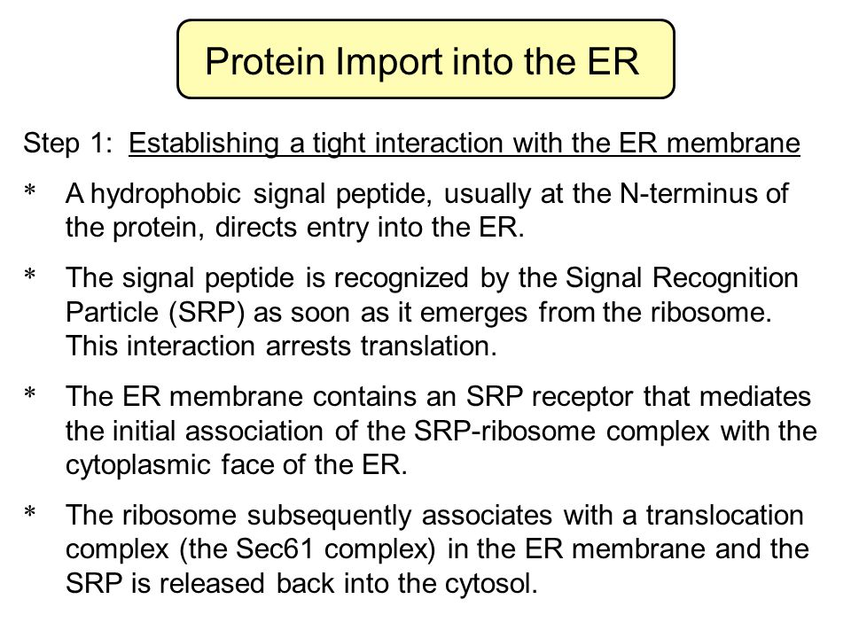 Protein Import into the ER