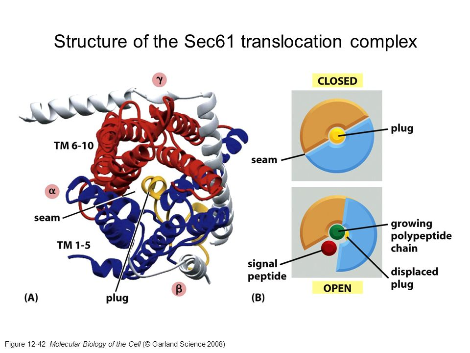 Structure of the Sec61 translocation complex