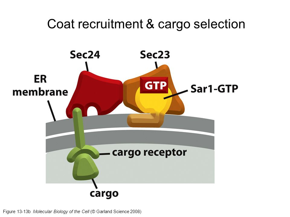 Coat recruitment & cargo selection