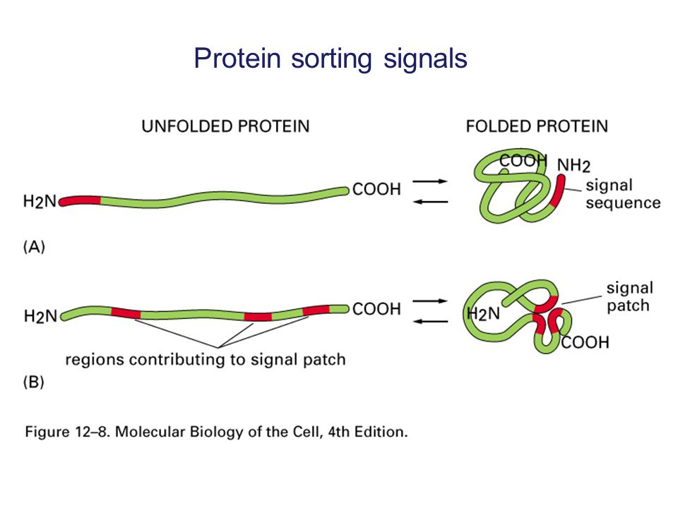 Protein sorting signals