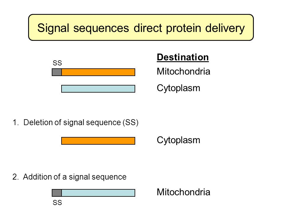 Signal sequences direct protein delivery