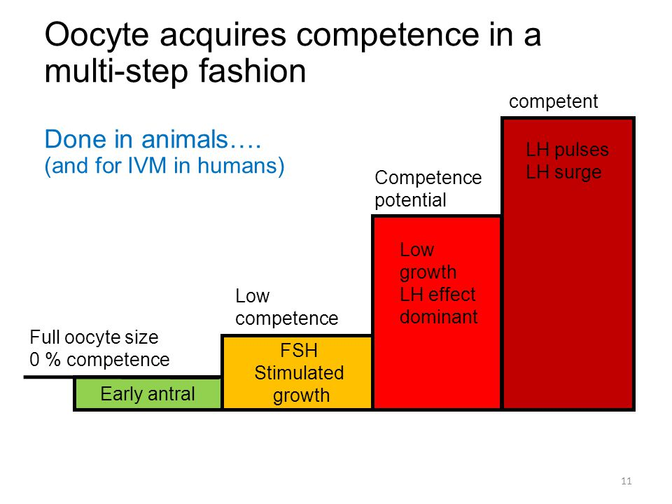Oocyte acquires competence in a multi-step fashion