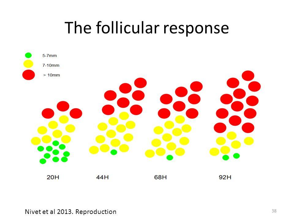 The follicular response