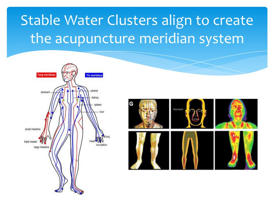 Stable Water Clusters align to create the acupuncture meridian system