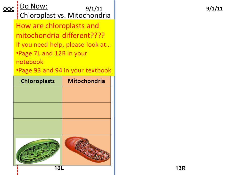 How are chloroplasts and mitochondria different