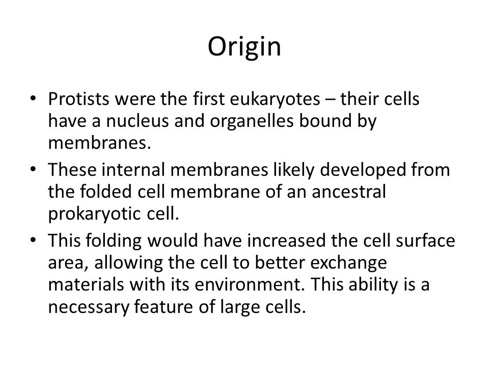 Origin Protists were the first eukaryotes – their cells have a nucleus and organelles bound by membranes.