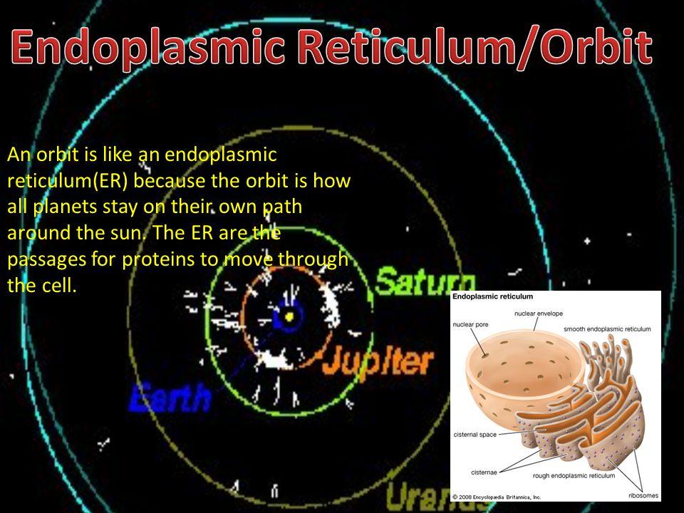 Endoplasmic Reticulum/Orbit