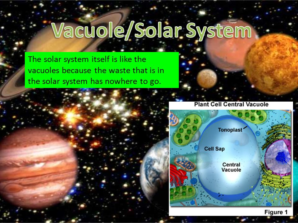 Vacuole/Solar System The solar system itself is like the vacuoles because the waste that is in the solar system has nowhere to go.