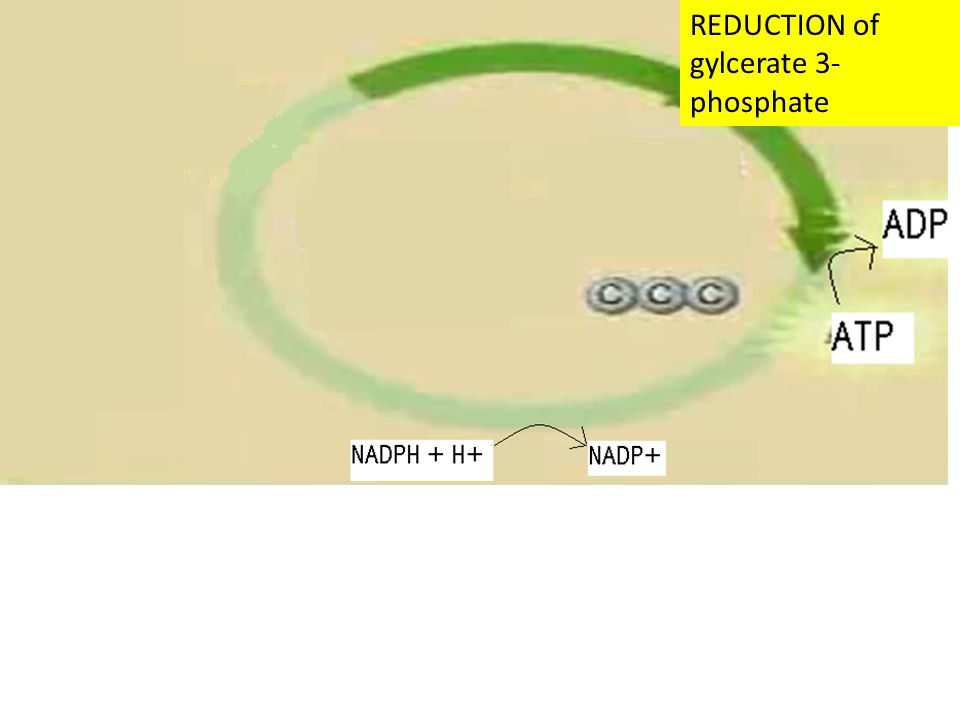 REDUCTION of gylcerate 3- phosphate