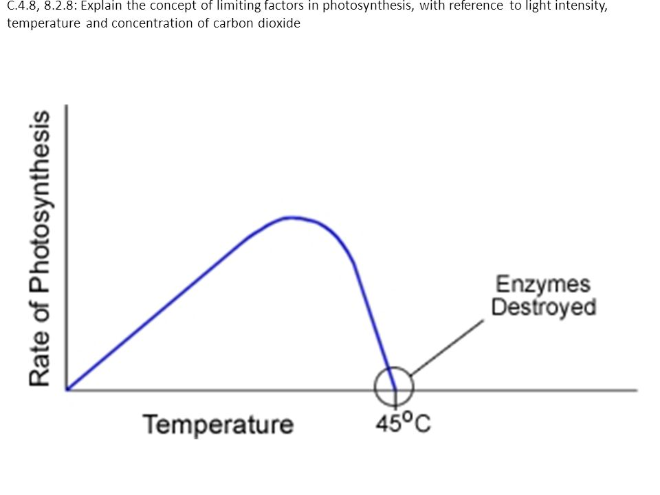 C.4.8, 8.2.8: Explain the concept of limiting factors in photosynthesis, with reference to light intensity, temperature and concentration of carbon dioxide