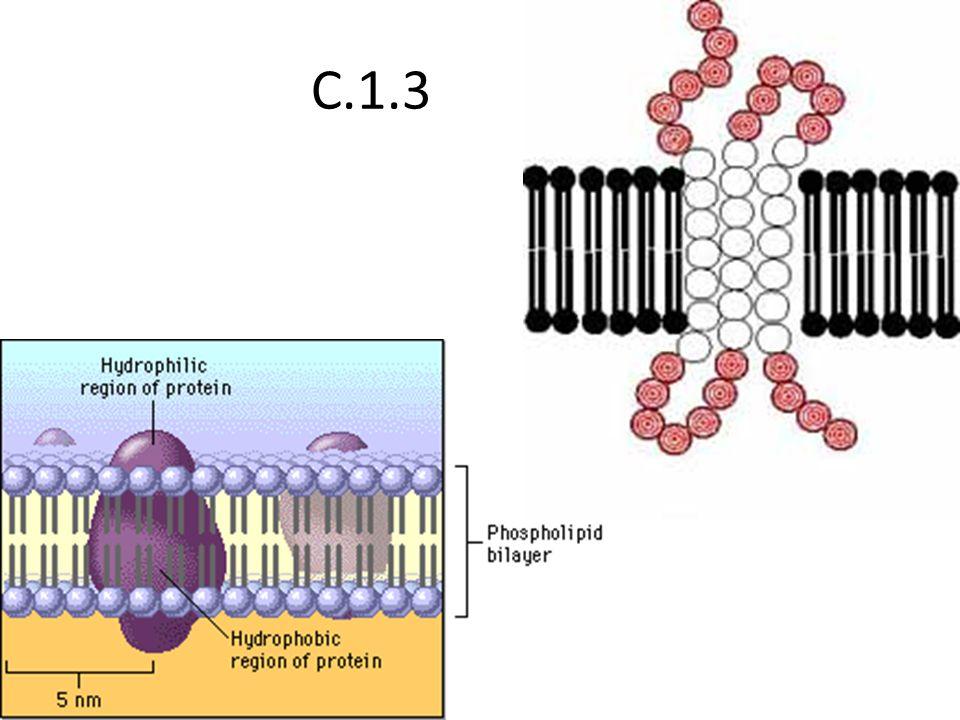 C.1.3