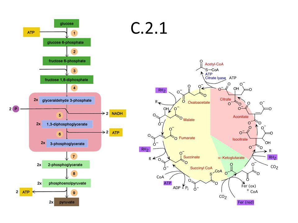 C.2.1