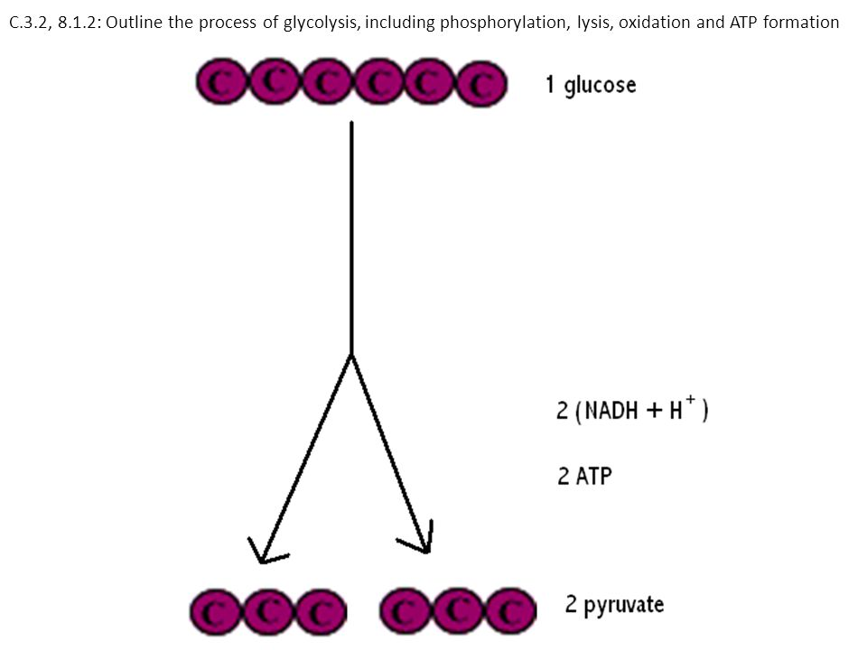 C.3.2, 8.1.2: Outline the process of glycolysis, including phosphorylation, lysis, oxidation and ATP formation